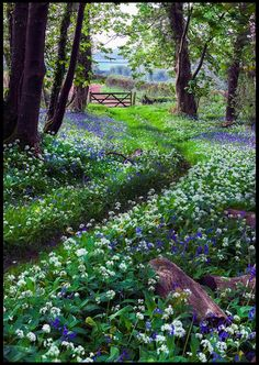 A beautiful woodland walk - source- Plants and Gardens FB #garden