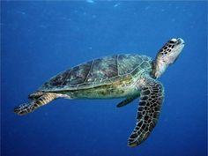 Moře a oceán :: Exotická Zvířata Planety