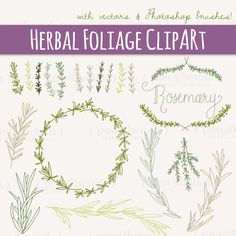 Rosemary Sprigs Clip Art // Photoshop Brushes // Hand Drawn Elements // Herbal Foliage Leaves Twigs Branches // Vector // Commercial Use on Etsy, $8.00
