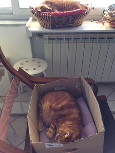 Romeo e Orazio. Ma quanto dormono i gatti!!!!!!! Beati loro!!