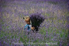 Best Herbs to Grow in your Medicinal Garden- Part 4: Lavender officinalis.... If only I had a field of lavendar, the only shame would be getting used to the scent, making it less potent