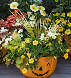Fall container garden  Tie containers together by coordinating pots and plants. The pots match, while the plants stick to a color palette of mainly yellows and whites. Variegated sweet flag (Acorus gramineus) is joined by Calibrachoa, Diascia, Nemesia, coralbells (Heuchera), and petunia.