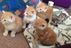 5 kittens regio Gent : 4