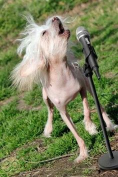 Gilligan singing