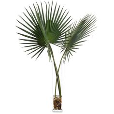 John-Richard Delta Palmettos Botanical ($633) ❤ liked on Polyvore featuring home, home decor, floral decor, plants, decor, fillers, flowers, greenery, floral home decor and flower home decor