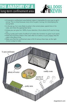 Long-term Confinement for Puppies Puppies Tips, Baby Puppies, Dogs And Puppies, Terrier Puppies, Boston Terrier, Corgi Puppies, Doggies, English Bulldog Puppies, English Bulldogs
