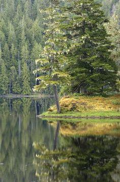 TINY WILDERNESS  Canada Alaska Moose Bear Camping Tent Dress It Up Craft Buttons