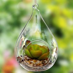 Decorative Teardrop Design Clear Glass Globe Hanging Artificial... ($8.45) ❤ liked on Polyvore featuring home, home decor, succulent plant terrarium, artificial silk plants, clear glass globe, fake plants and faux plants