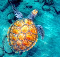 Sea turtles have stronger muscles than humans! Tag your friends who would love this For all Turtle lovers Way Of The Turtle, Turtle Symbolism, Earth Symbols, Turtle Painting, 5d Diamond Painting, Diamond Art, Marine Life, Beautiful World, Cute Animals