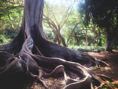 Kauai, Allerton Gardens