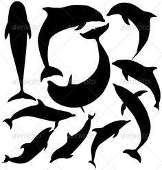 Dolphin silhouette on white background