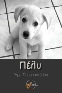 Πέλυ Labrador Retriever, My Books, Activities, Dogs, Animals, Labrador Retrievers, Animales, Animaux, Pet Dogs