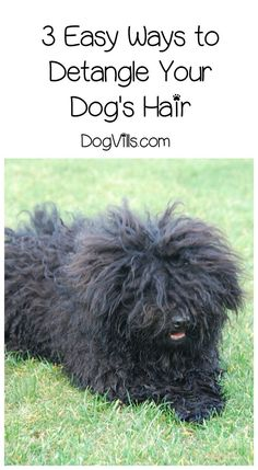 How To Detangle Dog Hair The Easy Way Http Www Dogvills Com Matted Dog Hair Dog Hair Hypoallergenic Dog Breed