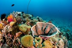 #coral #reef by WhitcombeRD, #philippines