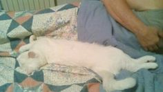 Rose fà il sonnellino pomeridiano.