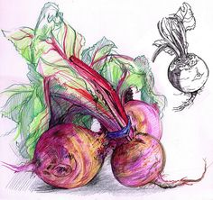 Beetroots to go with the carrots. Pencil Drawings, Art Drawings, Pencil Sketching, Drawing Faces, Realistic Drawings, Natural Form Art, Gcse Art Sketchbook, Watercolor Projects, Watercolor Artists