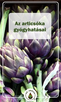 Artichoke, Spices, Medical, Herbs, Vegetables, Health, Salud, Health Care, Herb