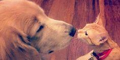 Adorable Kitten and Dog Grow Up Together.   David Utter, Dog Trainer: Obedience, Behavior Modification.  Train and/or Board  1-888-959-7463  www.davidutter.com  www.trainingdogsonline.com