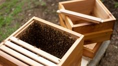 beehive - live stream - eat your local honey every day!