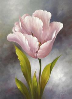 "©Fasani ""White Tulip I"""