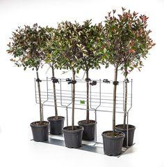 Mobiele presentatie van bomen en stammen. Mobile presentation for trees and stems.