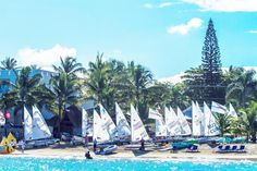 Cabarete, on the North Coast, is a Paradise for Sailing Enthusiasts | Access Dominican Republic