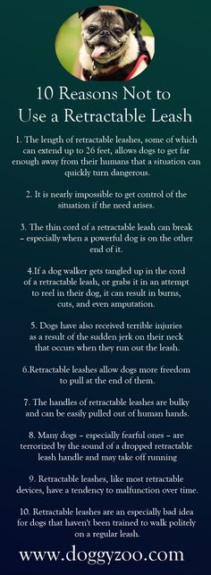 10 Reasons Not to Use a Retractable Leash