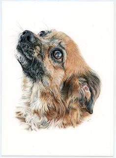 Mix. Ilustración lápiz. Illustration pencil. Dog portrait Owl, Illustration, Bird, Artwork, Animals, Portraits, Dogs, Greyhounds, Art