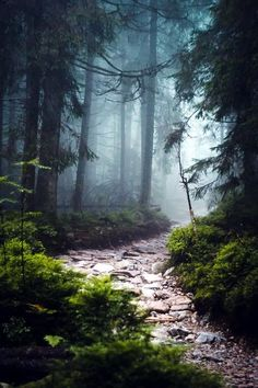 beautiful landscapes Fascinating Photographs of Forest Paths to another world