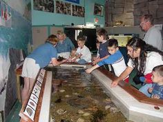 Maine State Aquarium in Boothbay Harbor, Exhibits include a Tide pool touch tank & a Shark touch tank. Fantastic place for kids! (and grown-ups, too)