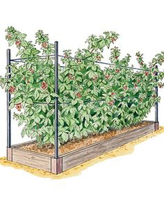 I could build something like this for my raspberries