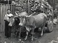 José María dos Piñeiros nos anos 50 do pasado século. Moaña