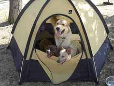 Camping with dogs and pets