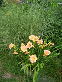 Day lilies and ornamental grasses