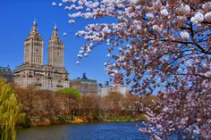 Central Park lake blossoms in spring ... New York City