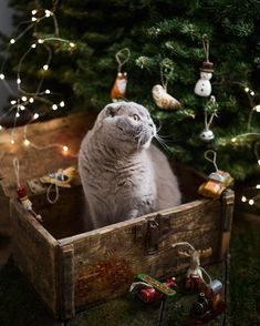 8,815 отметок «Нравится», 110 комментариев — Olesya Kuprin Photographer (@okuprin) в Instagram: «I wish you a happy New Year! Наступающий наступает и об этом нельзя молчать) жду пока все уснут,…»