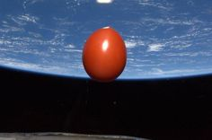 Tomato in space?