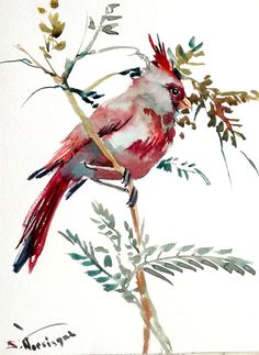 Pyrrhuloxia Original watercolor painting 12 X 9 in by ORIGINALONLY, $30.00