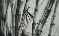 Charcoal drawing of Bamboo