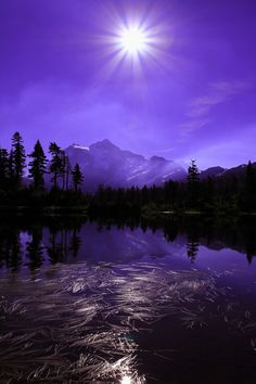 Lavender Star -