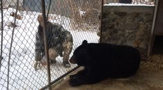 Is the Ohio Department of Agriculture bullying elderly Exotic owners? | Let the Truth Roar