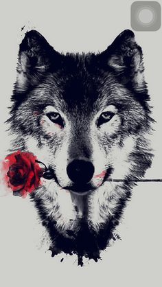 Beautiful wolf art with a splash of red rose... this would make a gorgeous tattoo 👑 pinterest: @rosajoeperez