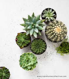 Do you have succulents, cactus or houseplants at home? Which type of plants do you love?