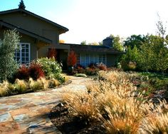 No Lawn Front Yard Design, Pictures, Remodel, Decor and Ideas