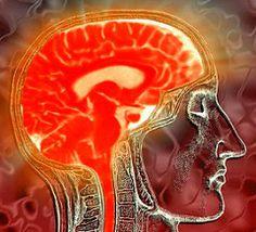 De las emociones y el cerebro a la salud y la enfermedad | El Blog del Cerebro | Blogs | ELESPECTADOR.COM