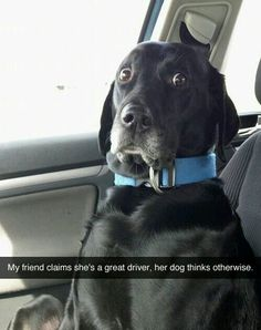 17 Funny Dog Pictures That Will Make You Laugh - Funny Dog Quotes - affordable custom pet memorials for everyone. The post 17 Funny Dog Pictures That Will Make You Laugh appeared first on Gag Dad. Cute Funny Animals, Funny Animal Pictures, Funny Cute, Dog Pictures, Funny Dogs, Cute Dogs, Funny Animal Memes, Funny Memes, Memes Humor