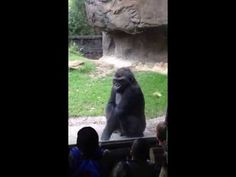Bullied Gorilla Teaches Bratty Kids a Lesson They Won't Forget (VIDEO)
