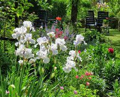 #-neuer Gartentraum- Iris