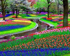 Keukenhof Garden in Netherlands