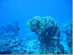 Fond Marin Club Med Guadrio à Tahiti